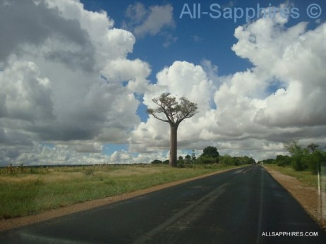 toliara-to-ilakaka-baobab-trees-002