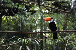 ecotourism-in-brazil