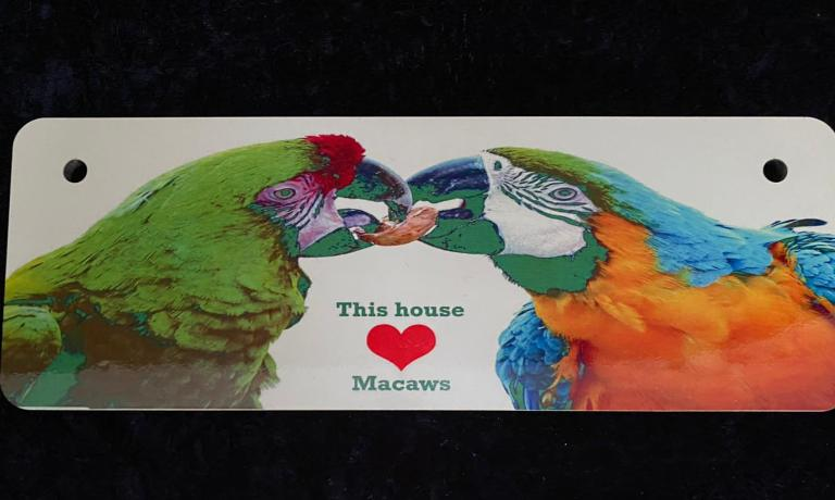 Macaw sharing a nut plaque