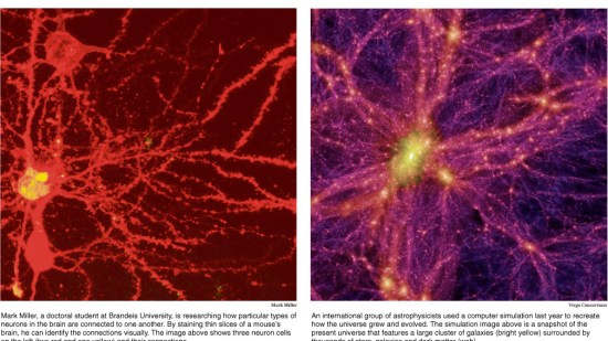 neuron and universe