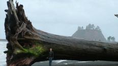 drift log tree