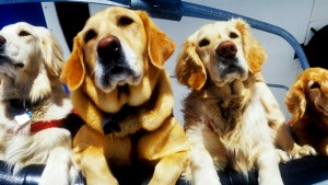 In Your Face: Squaw Valley Rescue Dogs