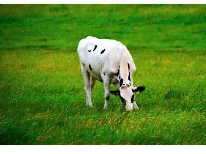 custom livestock panels, livestock panels