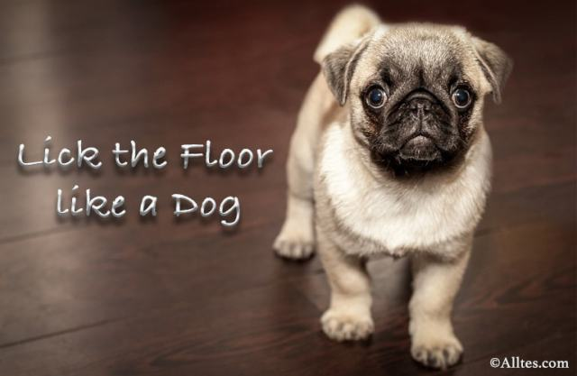 Lick the floor like a dog
