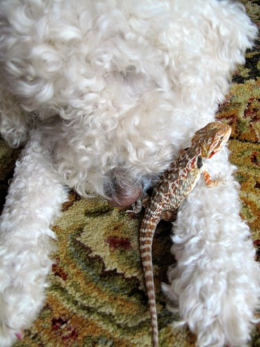 Dogs and Lizards