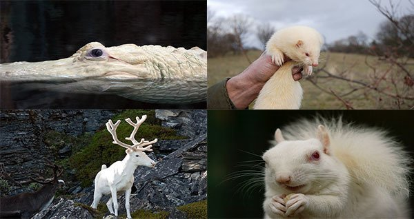The Surprising Problems Faced By Albino Animals In The Wild