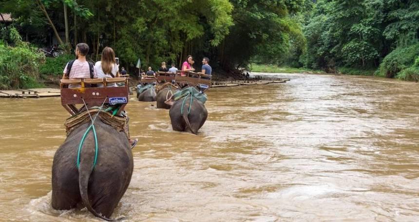 I turisti guidano un elefante in Tailandia