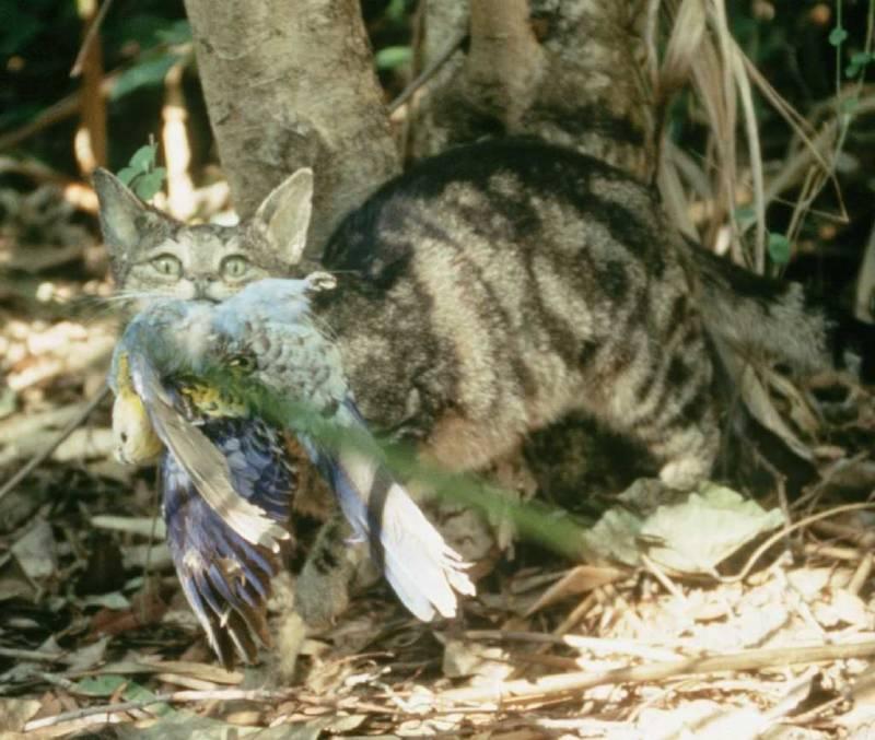 Gatto selvatico che mangia uccello