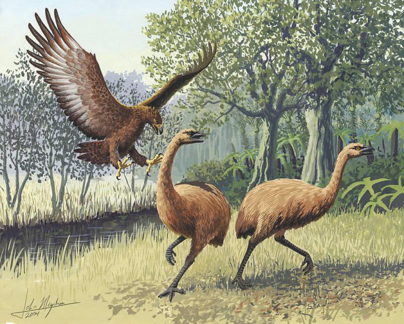 Giant Haast Eagle