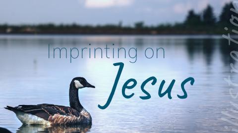 Imprinting On Jesus