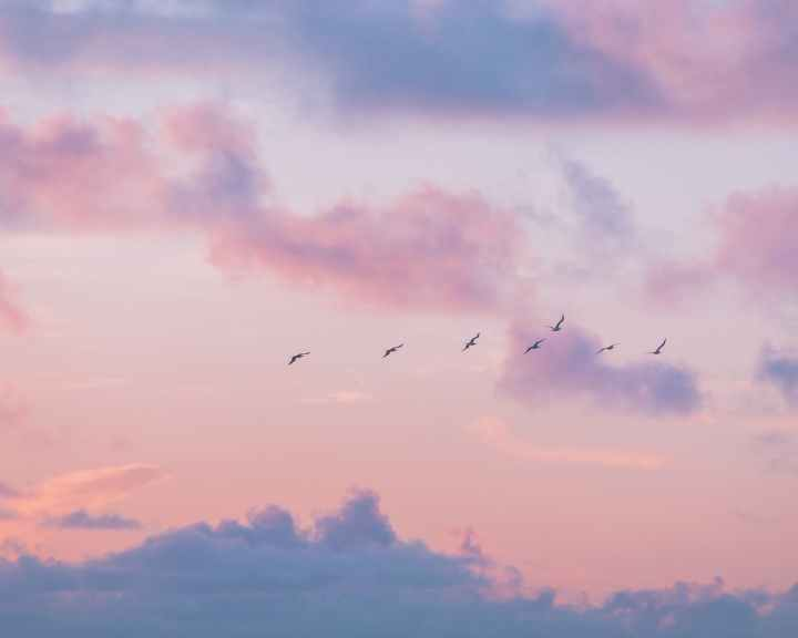 birds flying under orange clouds