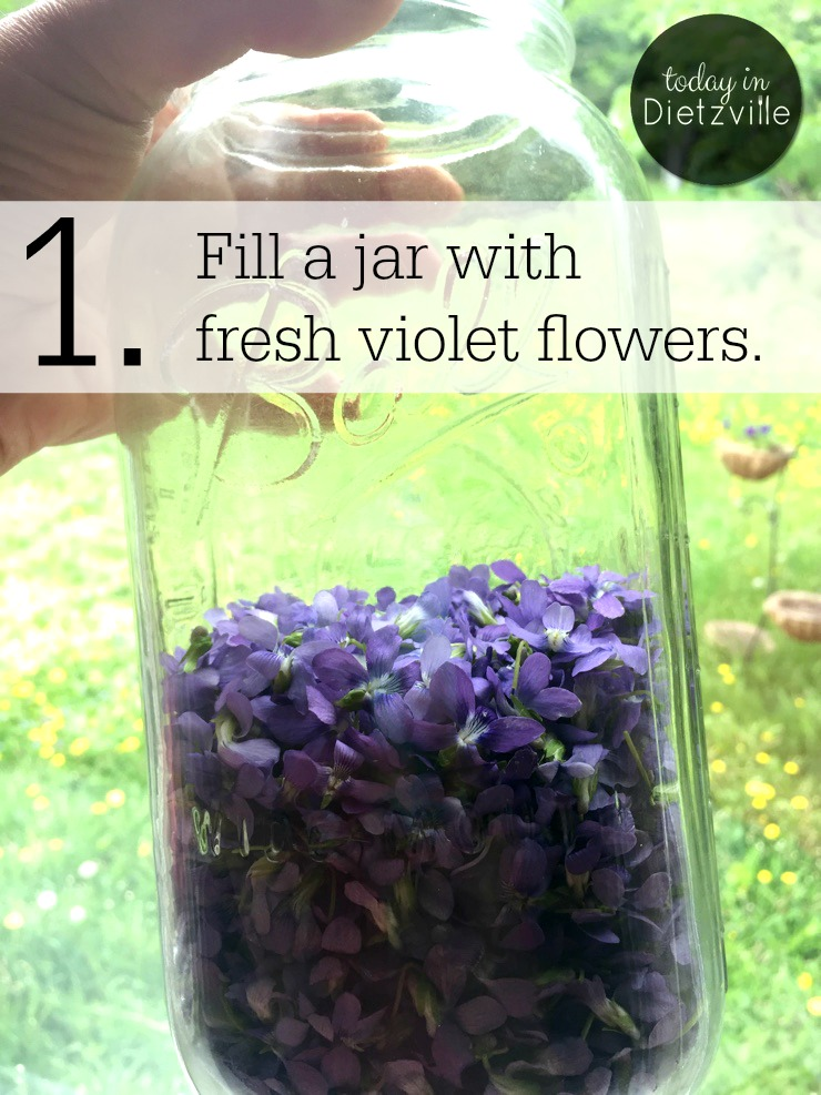 One section of our northern Minnesota yard is almost covered in wild violets! Making wild violet simple syrup is super easy, and it's a great way to use up these lovely little flowers if you have them in your yard! Plus wild violets are loaded with antioxidants and Vitamin C. So for gourmands and foragers alike, a wild violet simple syrup is a truly special, seasonal, and local treat!