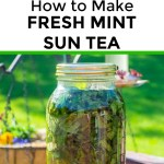collage of 2 images of fresh mint sun tea with text overlay between the images