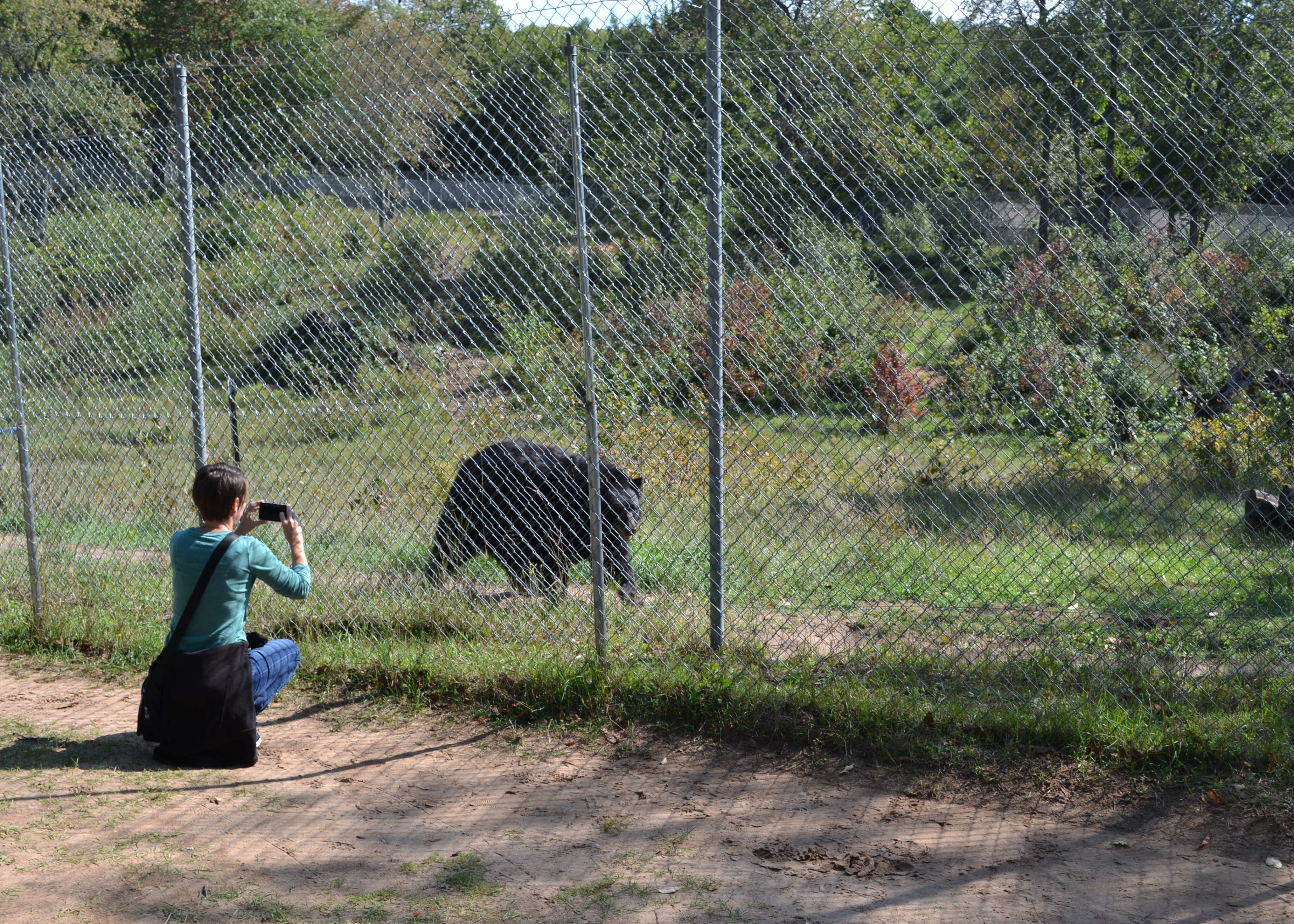 Have A Bear-y Good Time at Oswald's Bear Ranch: Newberry, MI