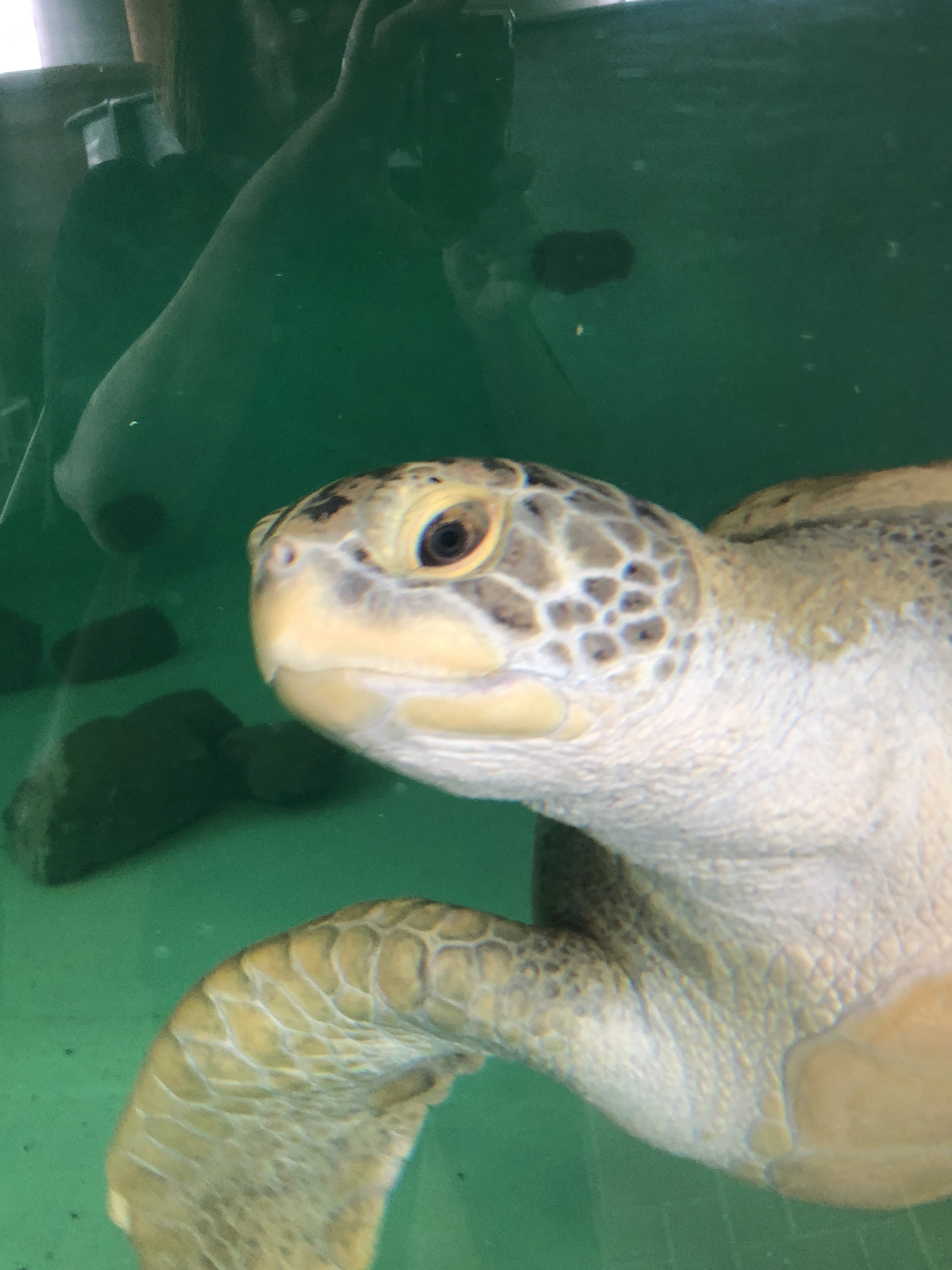 Sea Turtles Find Sanctuary on South Padre Island, TX