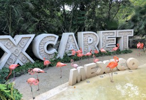 Against a jungle background, large stone letters spell out Xcaret Mexico, a flock of pink and orange flamingos stand in the foreground.