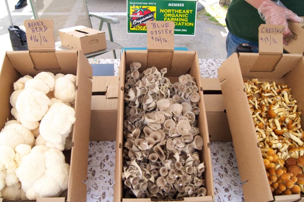 new hampshire mushroom company