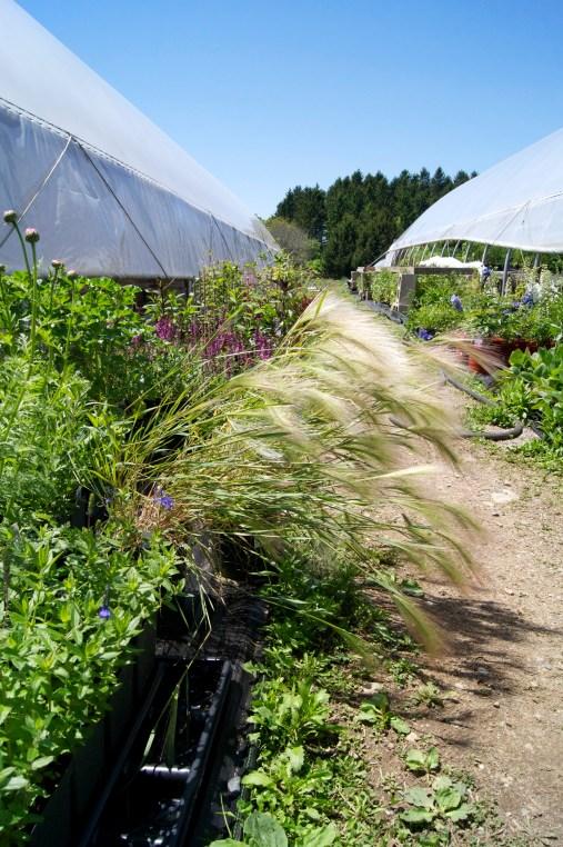 Canaan Farm greenhouses