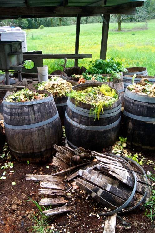 beautiful compost at cannard farm