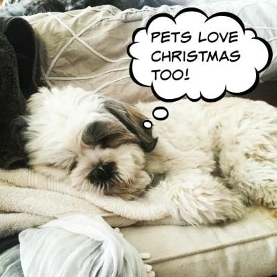 Remember the Furry Ones at Christmas