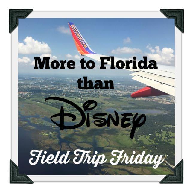 More to Florida than Disney