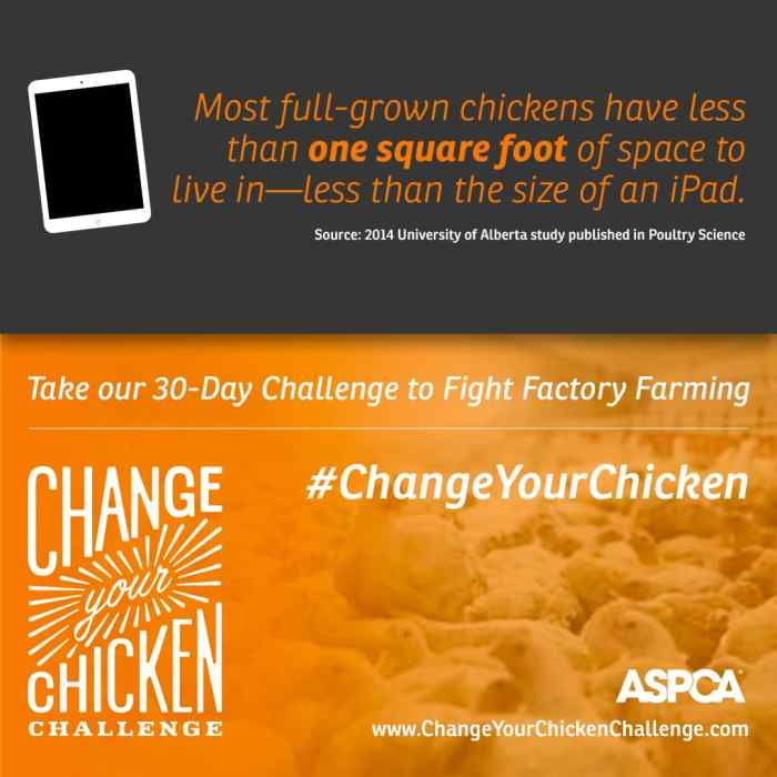 Change Your Chicken Challenge