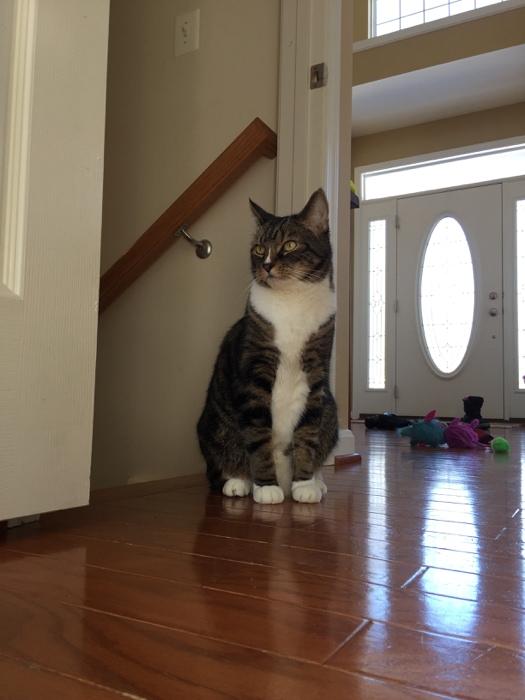 Beamer the cat ruler