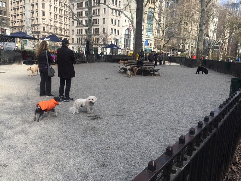 NYC dog park
