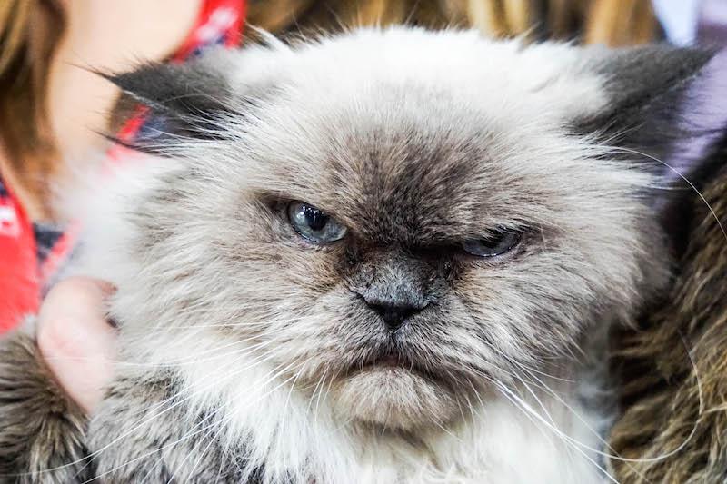 rukas-the-cat