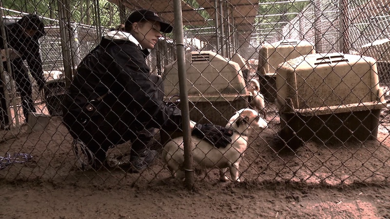 aspca-second-chance-dogs-puppy-mill-dogs