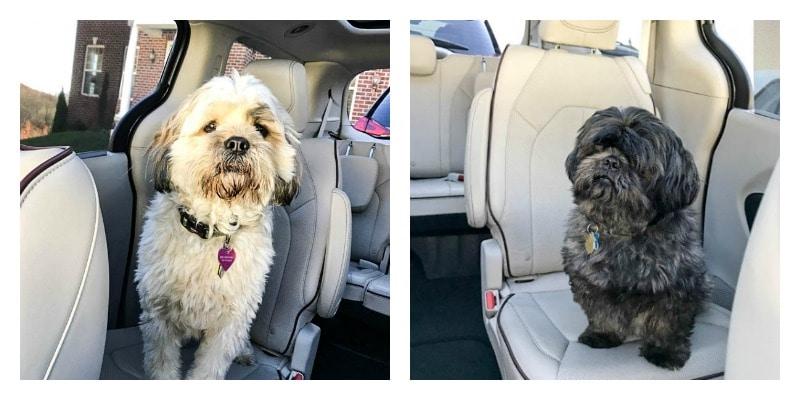 before-grooming
