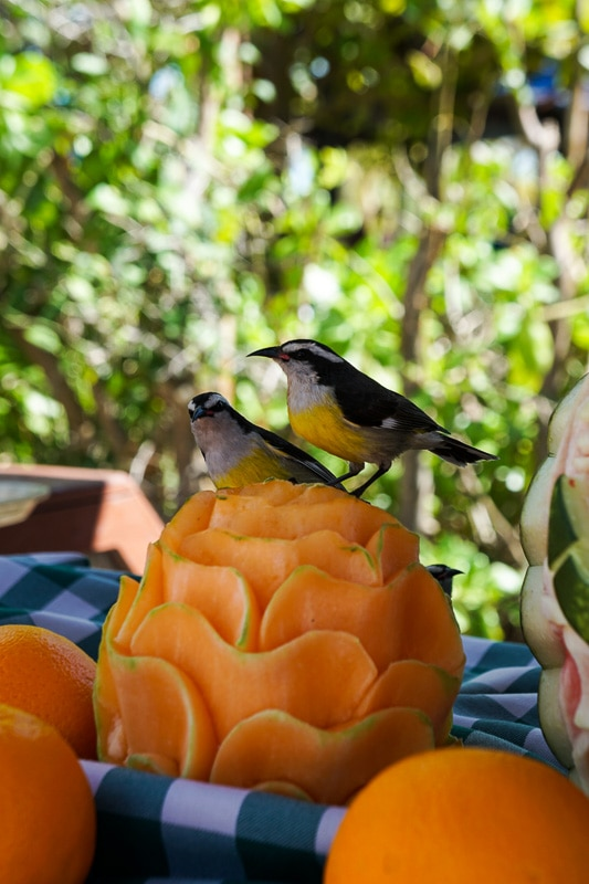 Fruit carvings at Castaway Cay
