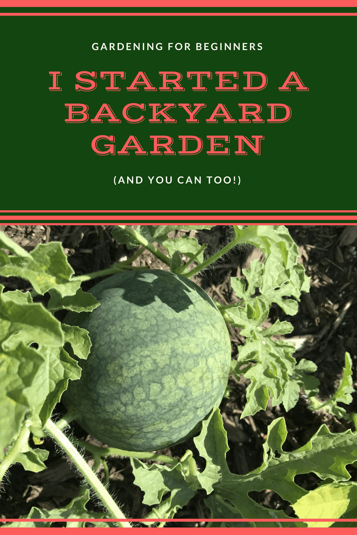i started a garden (and you can too!)