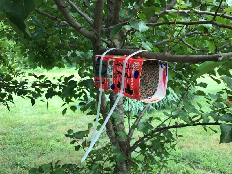 Hanging bee house 2