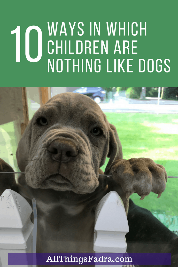 10 Ways In Which Children Are Different Than Dogs