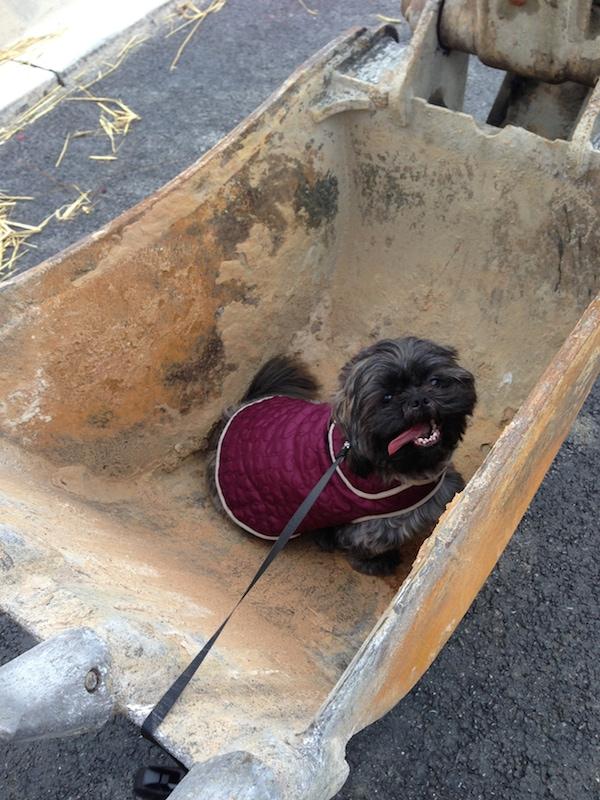 Roscoe in a bulldozer