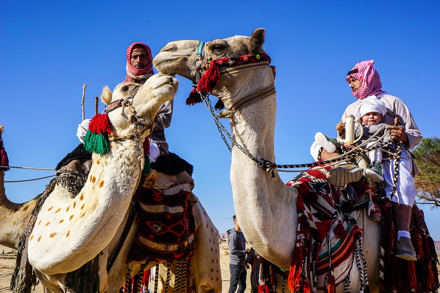 Camels at a Bedouin camp
