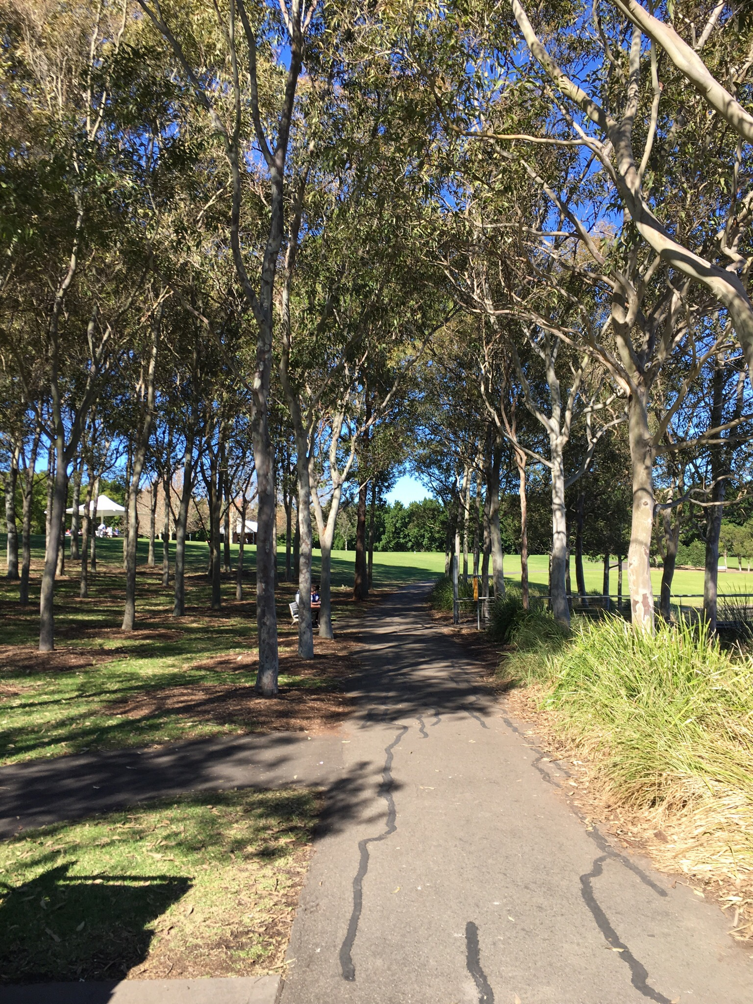 Lake Belvedere Pram Walk And Trike Path Sydney Olympic Park