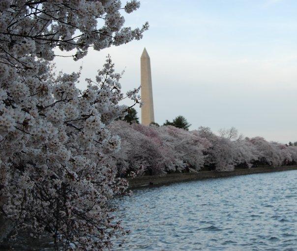 Washington, D.C. | Cherry Blossoms | Spring