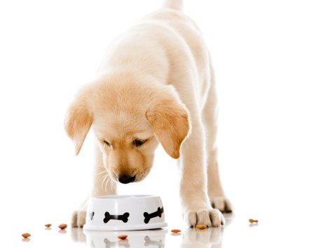 Image result for puppy eating