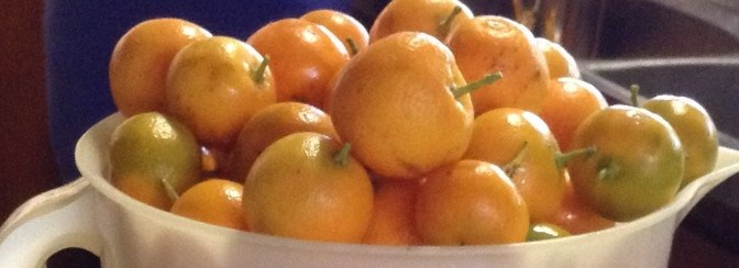 AUTUMN FRUIT Cumquats (Kumquats) and Quinces