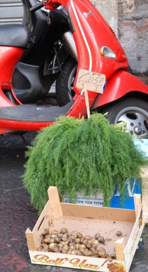 wild fennel_0011