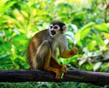 The hundredth Monkey Effect - Story about Positive Thinking
