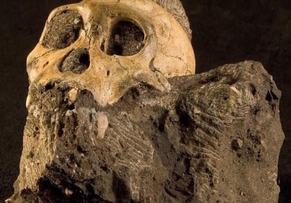Предки Гоминид