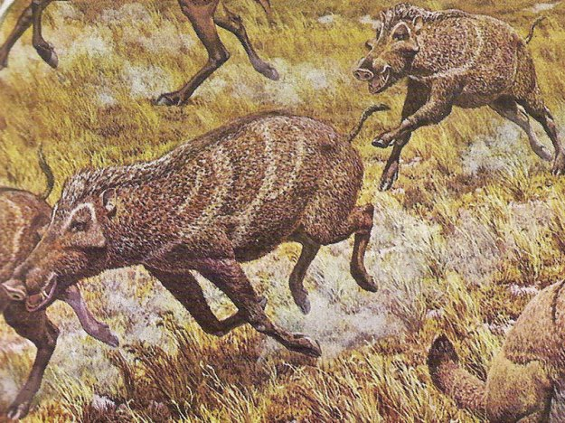 Prosthennops mural from the Smithsonian Museum