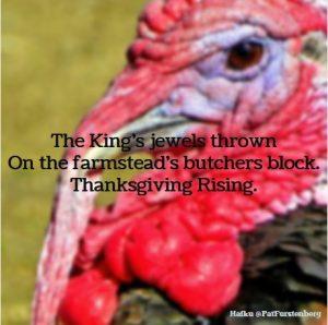 Turkey, a Thanksgiving Haiku