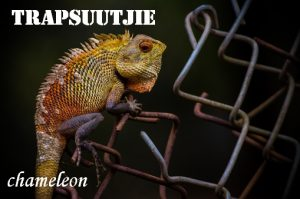 Trapsuutjie - step softly - chameleon. Afrikaans English literal translations