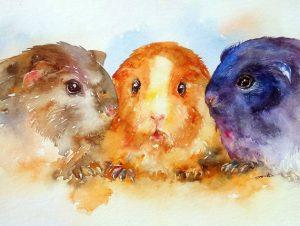 Meerschweinschen  - guinea pig