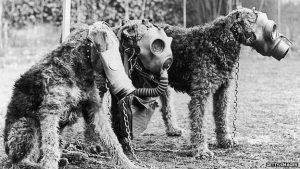 Airedale Terriers were taught to use gas masks as part of their military service -Getty source