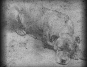 Sally, mascot of 11th Pensylvania Infantry, American Civil War
